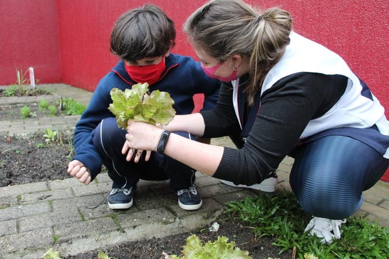 Em contato com a natureza, Infantil V colhe hortaliças