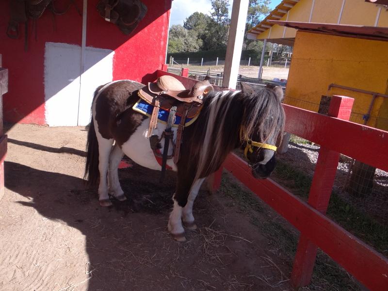 Vila dos Animais - Aula de Campo