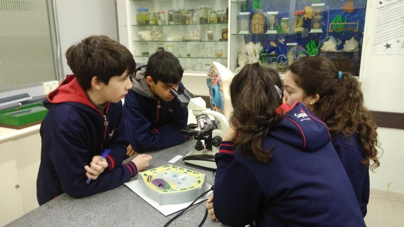 Reconhecimento de Tecidos Biológicos ao Microscópio