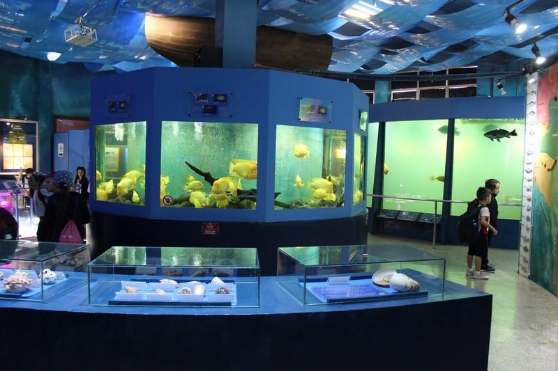 Visita ao Zoo, Museu e Aquarium