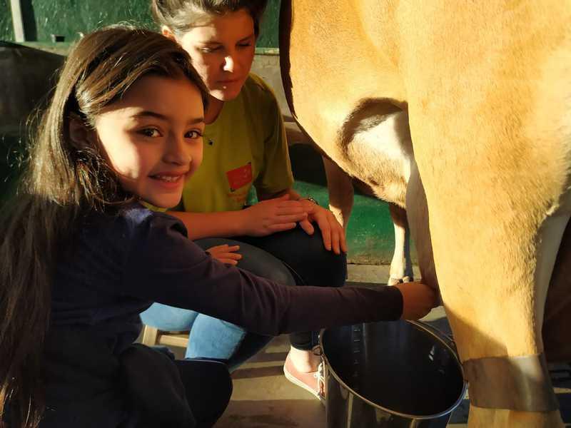 Turmas do 2º ano têm aula na Vila dos Animais, aprendem e se divertem com o contato com animais do campo