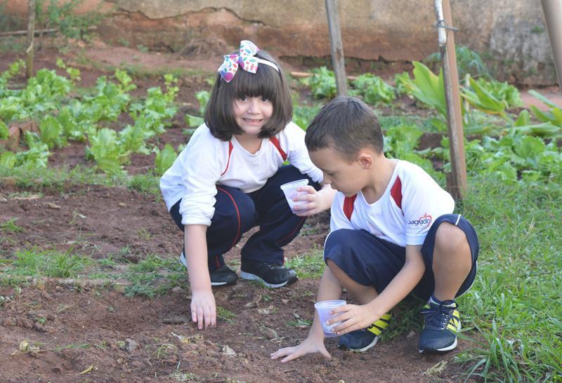 A Plantação do Infantil IV.2