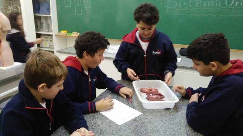 Educandos dos 8ºs anos têm prática sobre o Sistema Urinário analisando rins suínos frescos