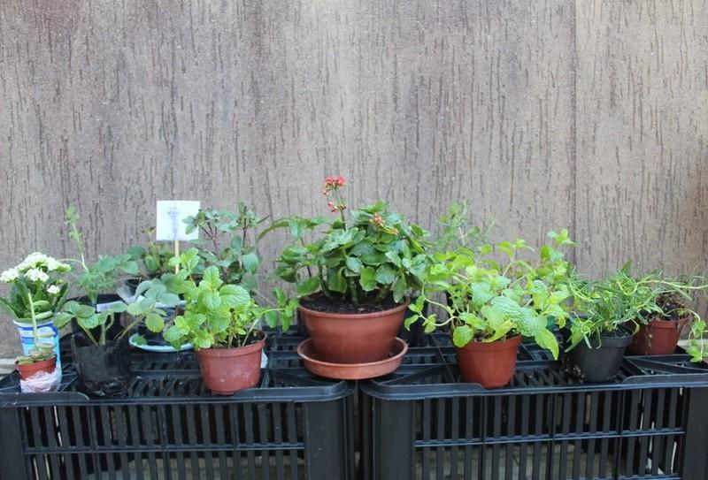 Observar e aprender com Plantas