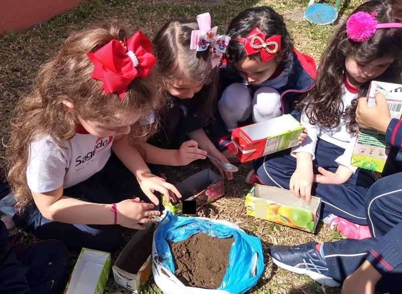 Infantil V confecciona trabalho com argila e planta girassóis