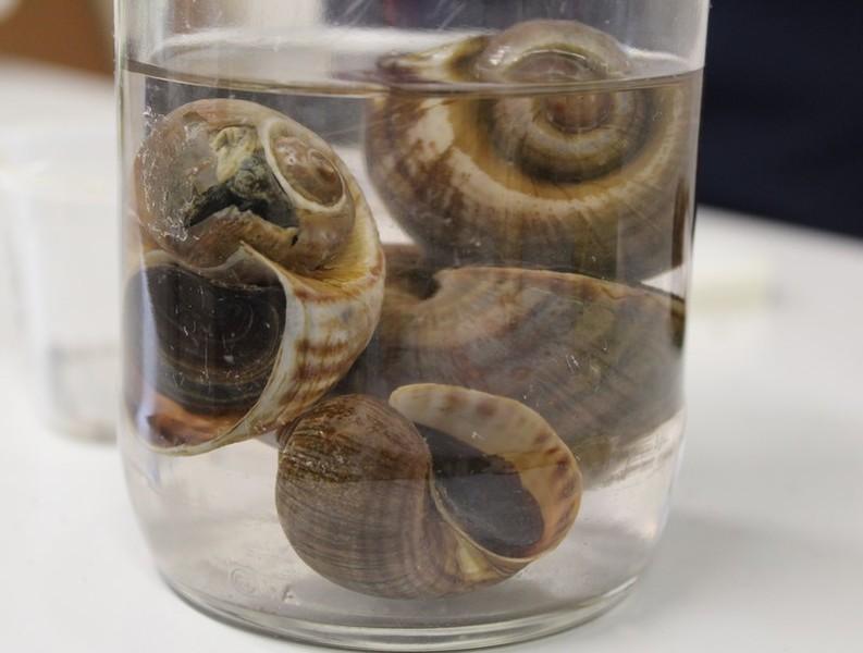 Aula prática sobre Filo Mollusca