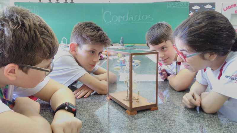 Educandos do 7° ano exploram detalhes dos 5 grupos de vertebrados